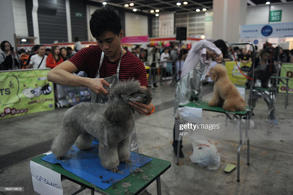 This picture taken on February 2, 2013 shows dogs being groomed by their owners as visitors (back) look on at the eighth Hong Kong Pet Show at the Hong Kong Convention and Exhibition Centre. Hong Kong has the second highest pet market in Asia, falling behind Japan, according to a statement released by the organisers of the pet show, which runs from February 1-3.