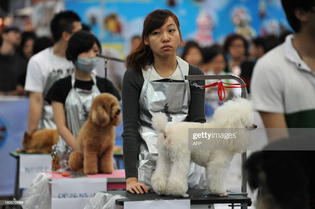 This picture taken on February 2, 2013 shows groomers waiting for their dogs to be judged after they have been groomed at the eighth Hong Kong Pet Show at the Hong Kong Convention and Exhibition Centre. Hong Kong has the second highest pet market in Asia, falling behind Japan, according to a statement released by the organisers of the pet show, which runs from February 1-3. AFP PHOTO / ANTHONY WALLACE