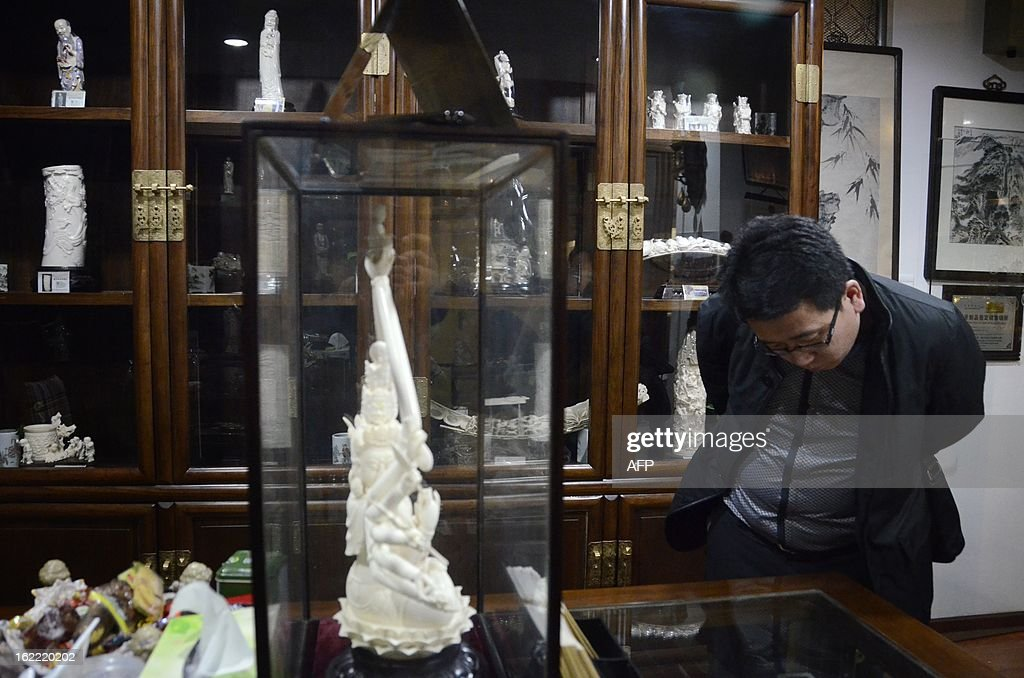 This picture taken on February 20, 2013 shows a Chinese man looking at an ivory display at a shop in Beijing. The number of African elephants killed by poachers in 2012 will most likely be higher than the 25,000 illegally killed the previous year, the head of UN wildlife trade regulator CITES said on Februay 19. One kilogramme (about two pounds) of ivory is currently estimated to be worth around 2,000 USD on the Asian black market.