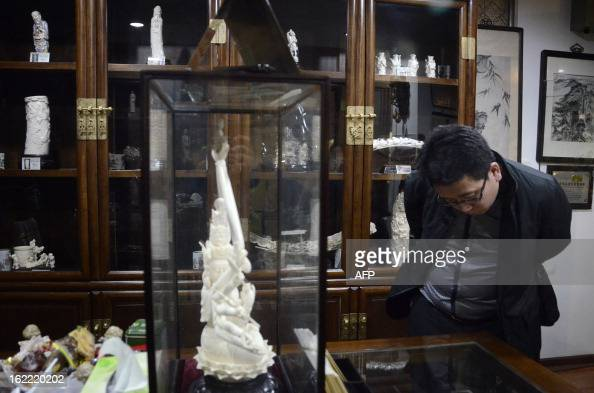 This picture taken on February 20 2013 shows a Chinese man looking at an ivory display at a shop in Beijing The number of African elephants killed by...