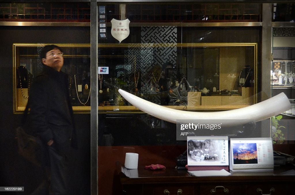 This picture taken on February 20, 2013 shows a Chinese man walking past an ivory tusk carving display at a shop in Beijing. The number of African elephants killed by poachers in 2012 will most likely be higher than the 25,000 illegally killed the previous year, the head of UN wildlife trade regulator CITES said on Februay 19. One kilogramme (about two pounds) of ivory is currently estimated to be worth around 2,000 USD on the Asian black market. AFP PHOTO / WANG ZHAO