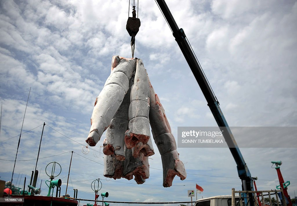 This picture taken on February 25, 2013 show carcasses of finless sharks being unloaded from a fishing boat in the port of Benoa in the resort island of Bali. Ninety percent of the world's sharks have disappeared over the past 100 years, mostly due to overfishing in countries such as Indonesia, the UN Food and Agriculture Organization said. Humans kill about 100 million sharks each year, mostly for their fins, according to FAO, and conservationists are warning that dozens of species are under threat.