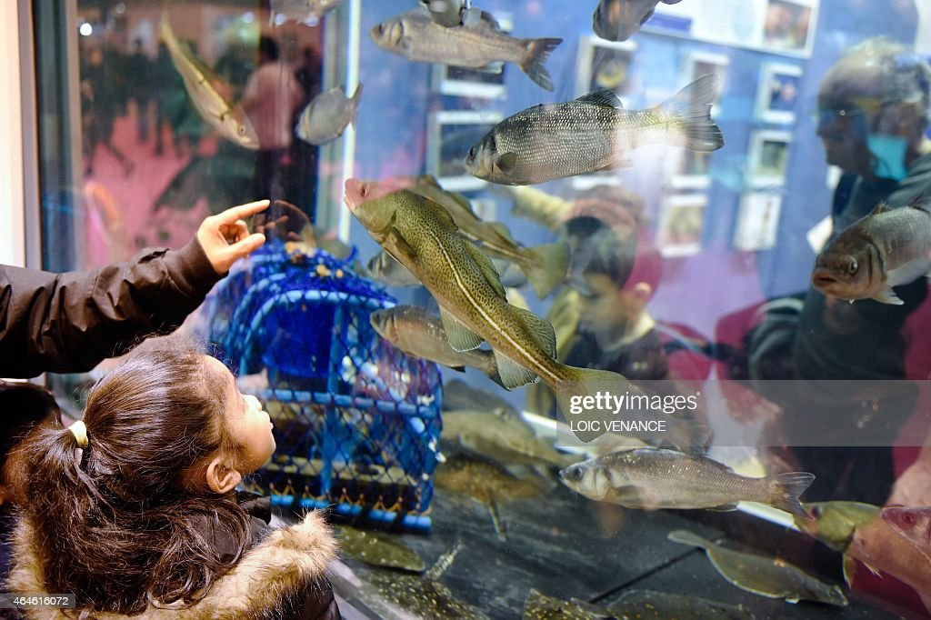 This picture taken on February 26 2015 shows a child looking at a Pacific Cod swimming into an aquarium at the Paris international agricultural show...