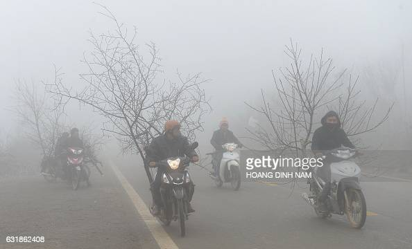 TOPSHOT This picture taken on January 15 2017 shows people transporting peach blossoms on their motorcycles to sell them in markets as they ride...