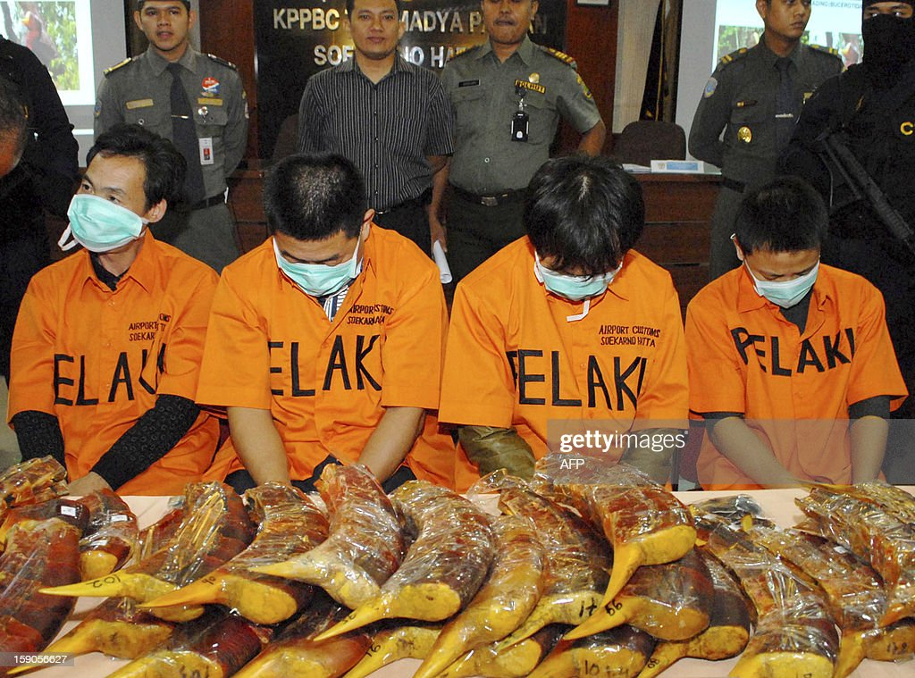 This picture taken on January 4, 2013, shows airport customs officers displaying four men of Chinese nationality and the hornbills they allegedly smuggled in Tanggerang Banten, at the international airport in Jakarta. Four Chinese nationals were arrested in Indonesia attempting to smuggle parts of endangered hornbills and pangolin, likely for use in traditional medicine, an official said. AFP PHOTO / Bima SAKTI