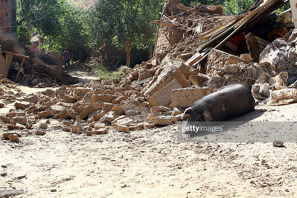 This picture taken on July 22, 2013 shows a dead pig lying beside a collapsed house in the earthquake-hit township of Majiagou in Minxian county in Dingxi, in northwest China's Gansu province. Rescuers battled through dusty rubble on July 23 to try to reach victims after two shallow earthquakes hit China, killing at least 89 people. CHINA