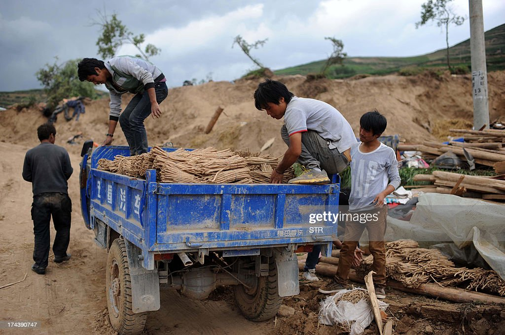 This picture taken on July 24, 2013 shows villagers rushing in the harvest of herbal medicines before a storm comes in Yongguang township, although most of their crops were damaged by the recent earthquakes and quake-triggered mudslides in Minxian county in Dingxi, northwest China's Gansu province. At least 94 people were killed, China's official news agency reported citing local authorities, with 1,000 more injured and 51,800 homes collapsing. CHINA