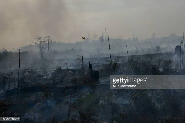 This picture taken on July 26 2017 shows the aftermath of the peat forest fire at Meulaboh Aceh province In the past week about 35 hotspots...