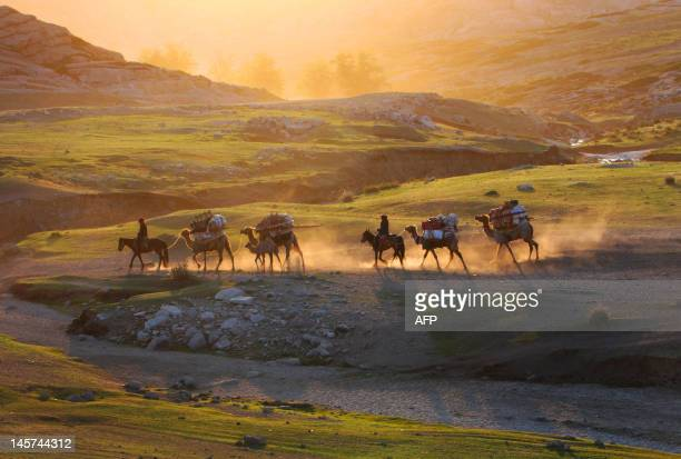 This picture taken on June 2 2012 shows Kazakh nomads herding their livestocks with their caravan across a plain in Altay farwest China's Xinjiang...