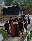 This picture taken on June 23 2015 shows Animals Asia staff pushing a cage with a newly rescued moon bear at a private bear farm which was targeted...