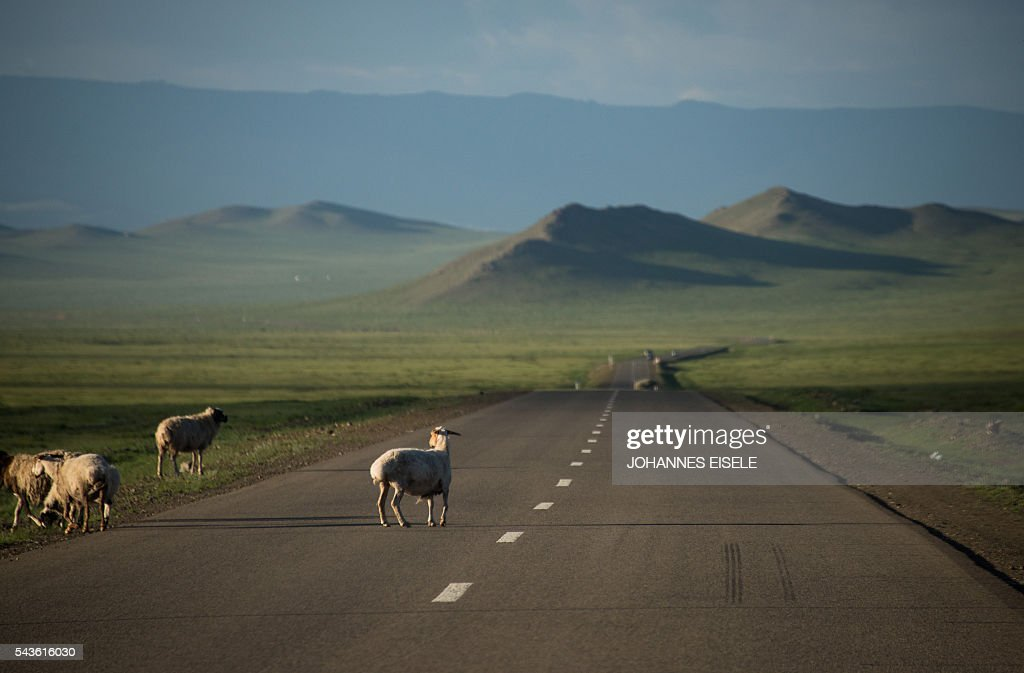 This picture taken on June 29, 2016 shows sheep on the highway near Zuunmod south of Ulan Bator. Mongolians went to the polls across their sprawling, sparsely-populated country on June 29 as it struggles to benefit from its vast natural resources amid disputes over foreign investment and slumping demand from neighbouring China. It took Mongolian nomad Pagvajaviin Shatarbaatar seven days to get to his polling station to vote in in the general election -- accompanied by more than 2,000 sheep, goats and horses. EISELE