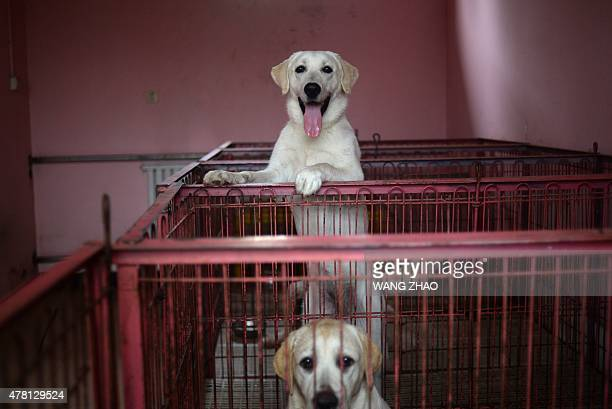 This picture taken on June 4 2015 shows dogs in their kennels at a dog training school in Beijing Pet ownership has grown rapidly in China over the...