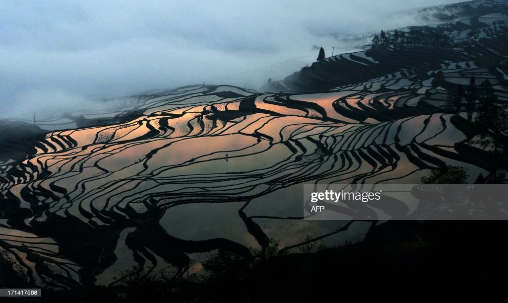 This picture taken on March 11, 2012 shows the terraced rice fields in Hani, southwest China's Yunnan province. Japan's Mount Fuji, a series of ancient terraced rice paddies China, and the desert city of Agardaz in Niger were among the cultural jewels granted World Heritage status by UNESCO at its annual meeting on June 22, 2013. CHINA OUT AFP PHOTO