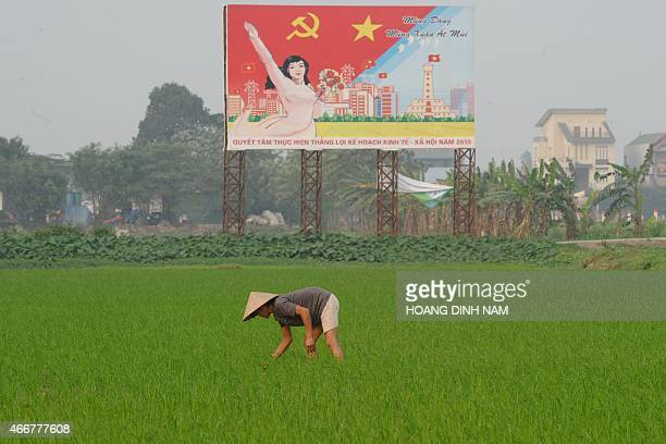 This picture taken on March 18 2015 shows a farmer working on a rice field next to a large propaganda poster featuring the ruling communist party in...