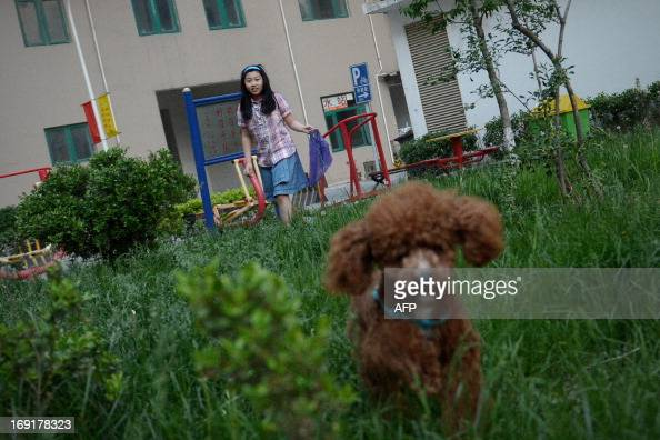This picture taken on May 12 2013 shows Chi Haoyuan Li Na's daughter walking her dog at a yard near her home in Beijing With two cars foreign...