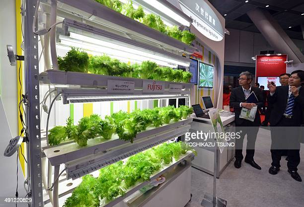 This picture taken on May 13 2014 shows a model of Japanese computer giant Fujitsu's lettuce cultivation factory at a press preview of the company's...