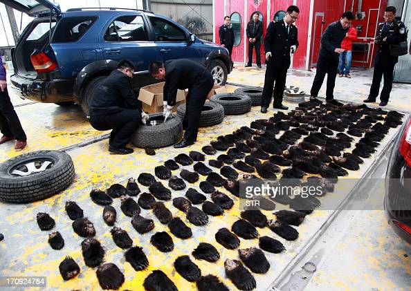 This picture taken on May 22 2013 shows Chinese officials and police displaying some 213 confiscated bear paws which were seized when they detained...