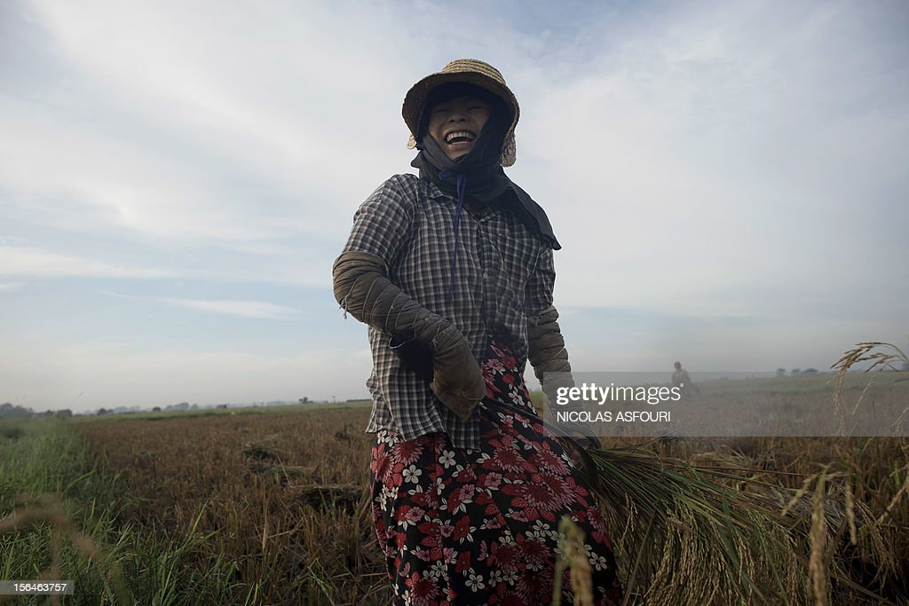 This picture taken on November 15, 2012 shows a Myanmar woman laughing with her colleagues as she harvests rice at a paddy field on the outskirts of Bago, around 80 km north of Yangon. Rice exports from Myanmar may more than double to 1.5 million metric tons this year, an industry group forecast, highlighting the country's potential to boost overseas trade as its government pursues reform. AFP PHOTO/ Nicolas ASFOURI