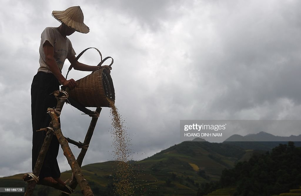 This picture taken on October 1, 2013 shows a Hmong ethnic hill tribe man pourring down paddy seeds from a height for the wind to extract empty seeds during rice harvesting on a terrace rice field in Mu Cang Chai district, in the northern mountainous province of Yen Bai. The local residents, mostly from the Hmong hill tribe, grow rice in the picturesque terrace fields whose age is estimated to hundreds years. Due to hard farming conditions, especially irrigation works, locals produce only one rice crop per year. In recent years a growing numbers of tourists have been attracted by the beautiful landscapes created by the region's rice terrace fields. AFP PHOTO/HOANG DINH Nam