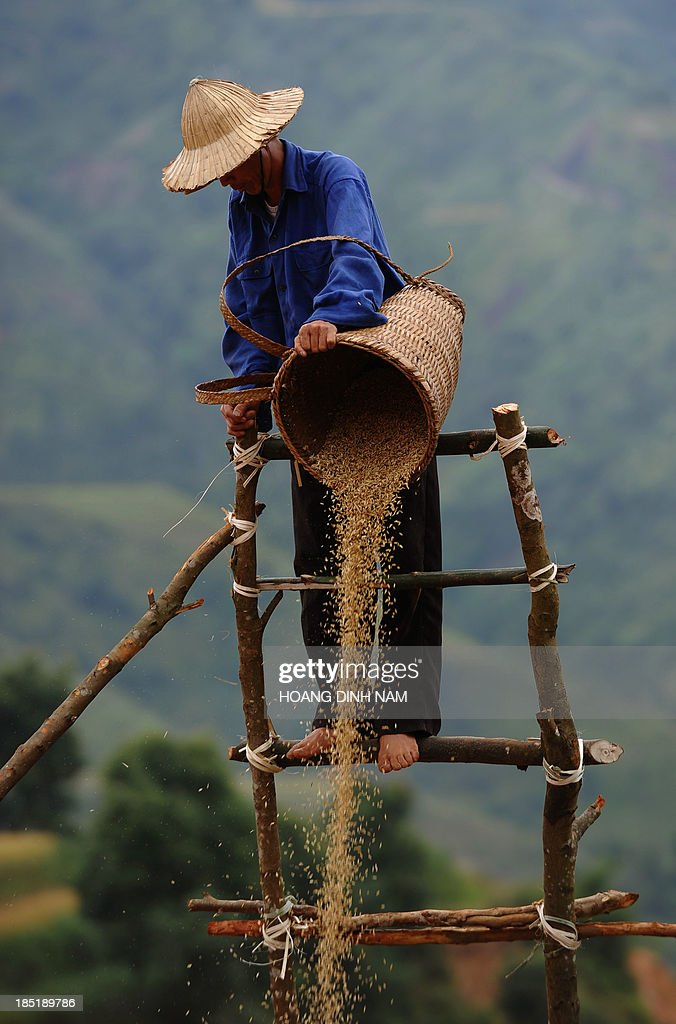 This picture taken on October 1, 2013 shows a Hmong ethnic hilltribe man pourring down paddy seeds from height in a way that wind will extract empty seeds during a rice harvesting on a terrace rice field in Mu Cang Chai district, in the northern mountainous province of Yen Bai. The local residents, mostly from the Hmong hill tribe, grow rice in the picturesque terrace fields whose age is estimated to hundreds years. Due to hard farming conditions, especially irrigation works, locals produce only one rice crop per year. In recent years a growing numbers of tourists have been attracted by the beautiful landscapes created by the region's rice terrace fields. AFP PHOTO/HOANG DINH Nam