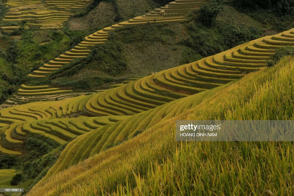 This picture taken on October 2, 2013 shows terrace rice fields in Mu Cang Chai district, in the northern mountainous province of Yen Bai. The local residents, mostly from the Hmong hill tribe, grow rice in the picturesque terrace fields whose age is estimated to hundreds years. Due to hard farming conditions, especially irrigation works, locals produce only one rice crop per year. In recent years a growing numbers of tourists have been attracted by the beautiful landscapes created by the region's rice terrace fields. AFP PHOTO/HOANG DINH Nam