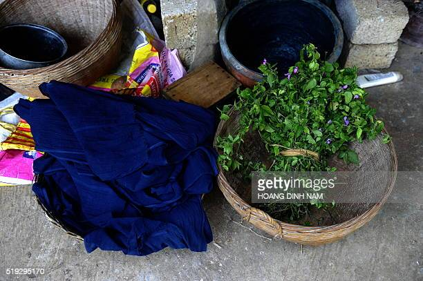 This picture taken on October 22 2015 shows indigo leaves used to dye materials by Nung ethnic women at Phuc Sen village in the northern province of...