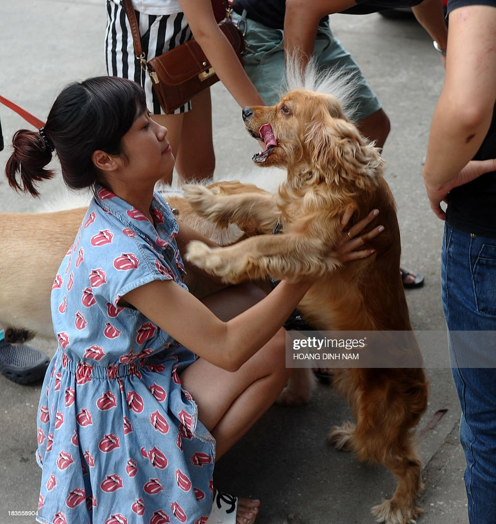 This picture taken on October 5, 2013 shows a girl playing with her pet dog at a dog show in Hanoi. Pet ownership in Vietnam has soared over the last 20 years as the middle class swelled since the Southeast Asian communist nation switched to a market economy in the early 1990s.