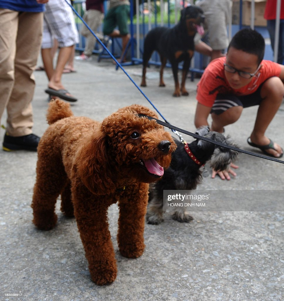 This picture taken on October 5, 2013 shows people with their pet dogs at a dog show in Hanoi. Pet ownership in Vietnam has soared over the last 20 years as the middle class swelled since the Southeast Asian communist nation switched to a market economy in the early 1990s. AFP PHOTO/HOANG DINH NAM