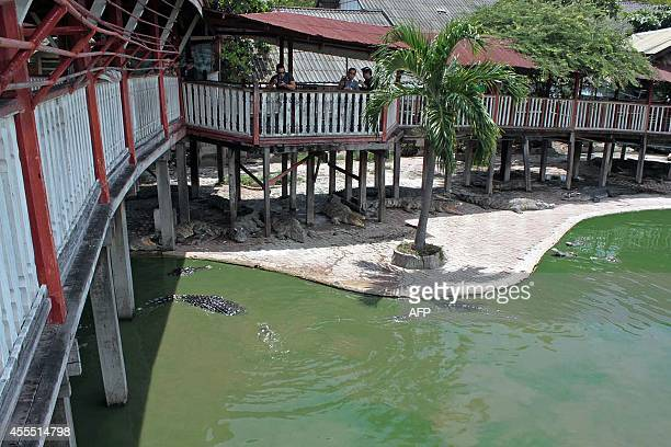 This picture taken on September 15 2014 shows crocodiles in and outside a pond at the farm where a woman committed suicide in Samut Prakan outside...