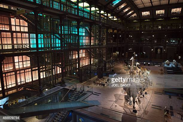 This picture taken on September 16 2014 shows stuffed animals in the Evolution's great gallery of the Museum of Natural History in Paris The...