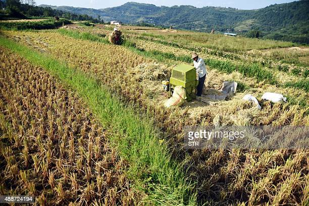 This picture taken on September 16 2015 shows Chinese farmers working in their paddy fields in Chongqing Agriculture is a vital industry in China...