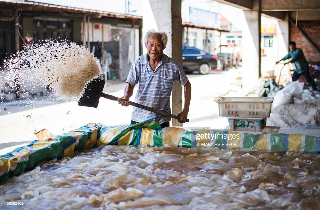 This picture taken on September 17, 2016 shows a man throwing salt onto jellyfish in oder to pickle them in Xianrendao next to Yingkou City in China's northeastern Liaoning province. For decades, equine-powered carts have trundled through the shallow waters off the peninsula near Xianrendao to meet shallow-keeled trawlers piled high with jellyfish, which teem in the waters of the Yellow Sea. Now Qin, 55, and his last two mules are ready to retire, as the area's traditional way of life slides into history. EISELE