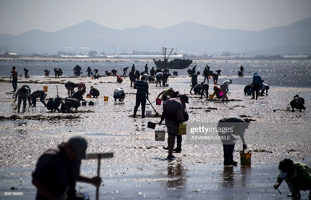 This picture taken on September 18, 2016 shows people digging in the sand on the beach trying to catch razor clams in Xianrendao in China's northeastern Liaoning province. / AFP / JOHANNES