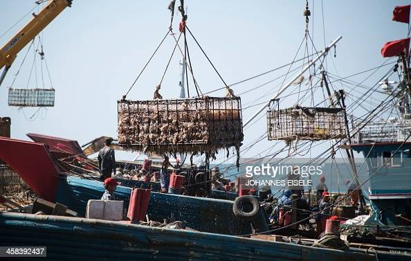 This picture taken on September 19 2016 shows boats of fishermen unloading their jellyfishes harvest on to lorries in Xianrendao next to Yingkou City...
