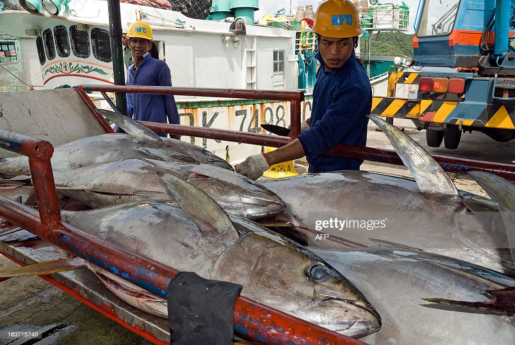 This undated photo received on March 15, 2013 shows fishermen on a Taiwanese trawler unloading tuna for export to Japan at Malakal port on Koror island in Palau. Palau's president has proposed banning all commercial fishing in the Pacific nation's waters to create one of the world's largest marine reserves, covering an area roughly the size of France. AFP PHOTO / Richard W. Brooks