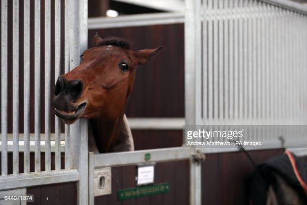 Thistlecrack during a stable visit to Colin Tizzard's stable at Milborne Port Dorset