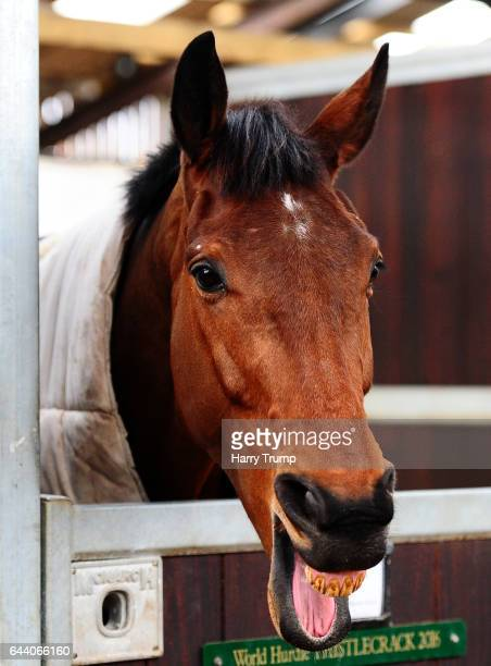 Thistlecrack looks on during a Colin Tizzard Stable Visit at Spurles Farm on February 23 2017 in Sherborne United Kingdom