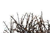"""""""Dense group of thorns, selective focus. Shangri-La, Yunnan, China."""""""