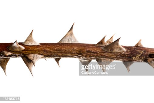 Thorn Twig