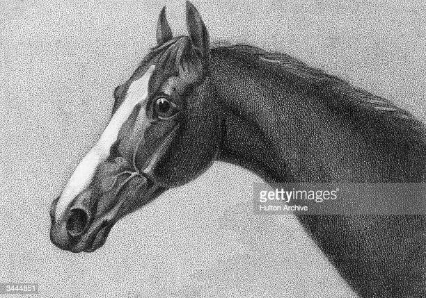 Thorougbred racehorse Eclipse also known as Old Eclipse foaled in 1764 He won every race he ran in and sired several Derby winners before dying in...