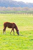 Filmed in Thoroughbred Horses in Niikappu,Hokkaido,Japan.