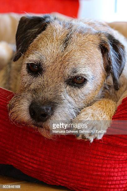 Thoughtful dog relaxing at home