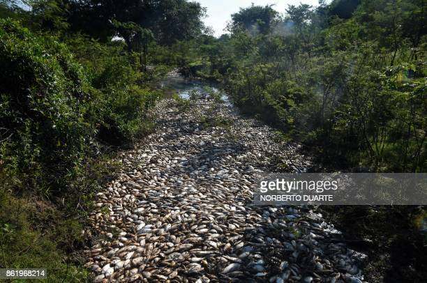 TOPSHOT Thousands of dead fish float in the Confuso river in Villa Hayes 30km north of Asuncion on October 16 2017 Municipality authorities are...