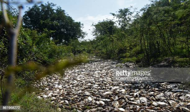 Thousands of dead fish float in the Confuso river in Villa Hayes 30km north of Asuncion on October 16 2017 Municipality authorities are investigating...
