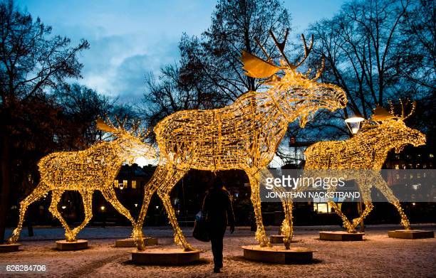 TOPSHOT Thousands of lights decorate moose statues in Stockholm on November 28 2016 Stockholm has lit over 700000 Christmas lights around the city...