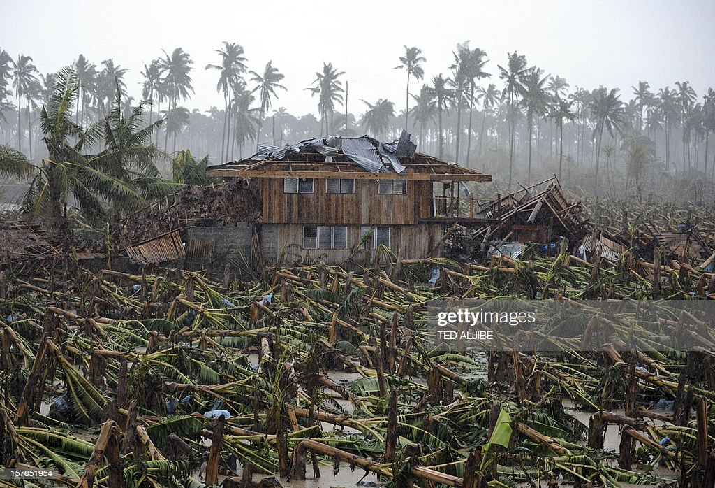 Thousands of typhoon toppled banana trees are seen on a plantation in New Bataan, Compostela Valley province on December 7, 2012. President Benigno Aquino vowed action on the Philippines' typhoon disasters December 7 as bruised and grieving survivors tried to recover from the latest that left nearly 500 people dead. AFP PHOTO/TED ALJIBE