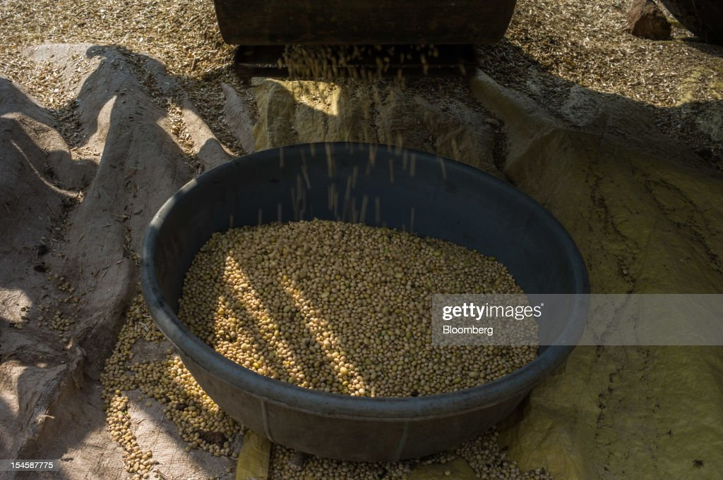Thrashed soybeans are collected in a bowl in the district of Burhanpur, Madhya Pradesh, India, on Friday, Oct. 19, 2012. Global soybean consumption will drop about 3 million metric tons in 2012-2013 as record prices curb demand for the oil made from the oilseed for food and biofuel, Thomas Mielke, executive director of Oil World, said. Photographer: Sanjit Das/Bloomberg via Getty Images