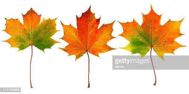 3 つの秋の葉