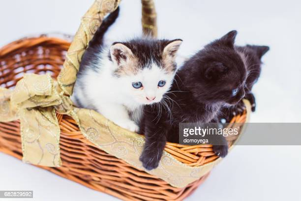 Three baby cats playing in the basket