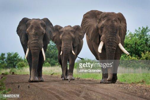 Tre grandi elefanti su una strada in terra battuta